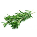 Rosemary Spain Essential Oil